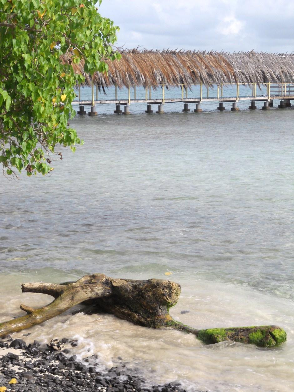 Martinique (59)
