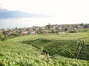 Vignobles en terrasse - Lavaux