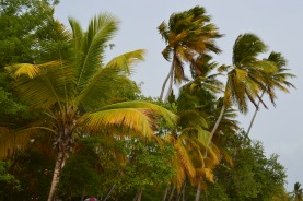 Martinique 2014 (221)