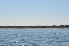 Bassin d'Arcachon - Jour 2 (33)
