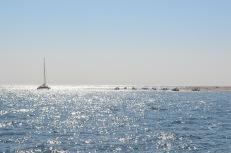 Bassin d'Arcachon - Jour 2 (34)